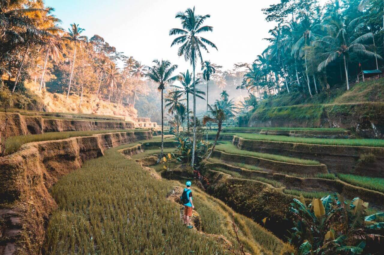 Bali freelance